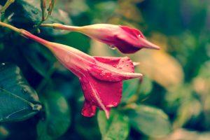 Plantes et arbres stabilisés à la maison : quels avantages ?