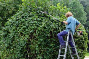 Pourquoi confier son jardin à un paysagiste ?